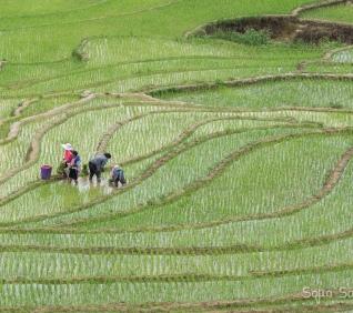Sapa,Vietnam