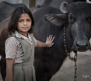 Girl and her buffalo, Narlai, India.