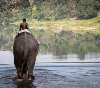 Walk in the river, Abhayaranyam, Cochin
