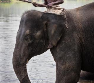 Elephant keeper, Kodanac, India.