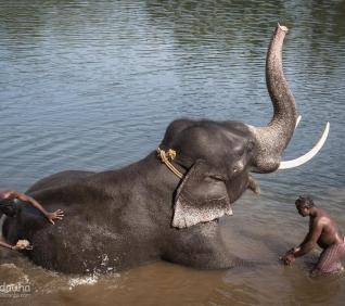 Elephant bath, Abhayaranyam, Kodanac