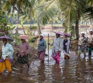 Women, ricefields, Kumarakom India