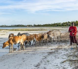 Zanzibar-109