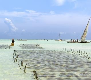 Zanzibar-135