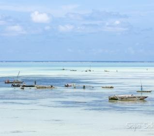 Zanzibar-155