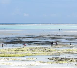 Zanzibar-177