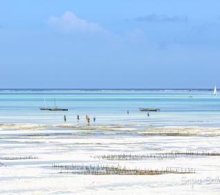Zanzibar-179