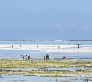 Zanzibar-181