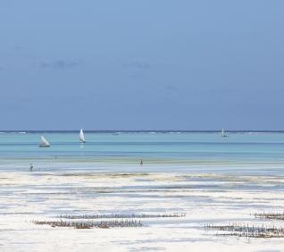 Zanzibar-51