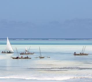 Zanzibar-56