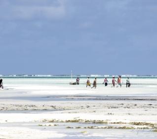 Zanzibar-95