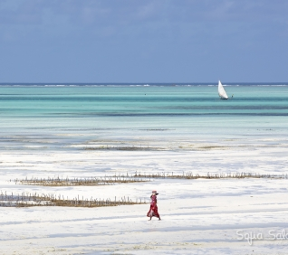 Zanzibar-96