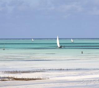 Zanzibar-98